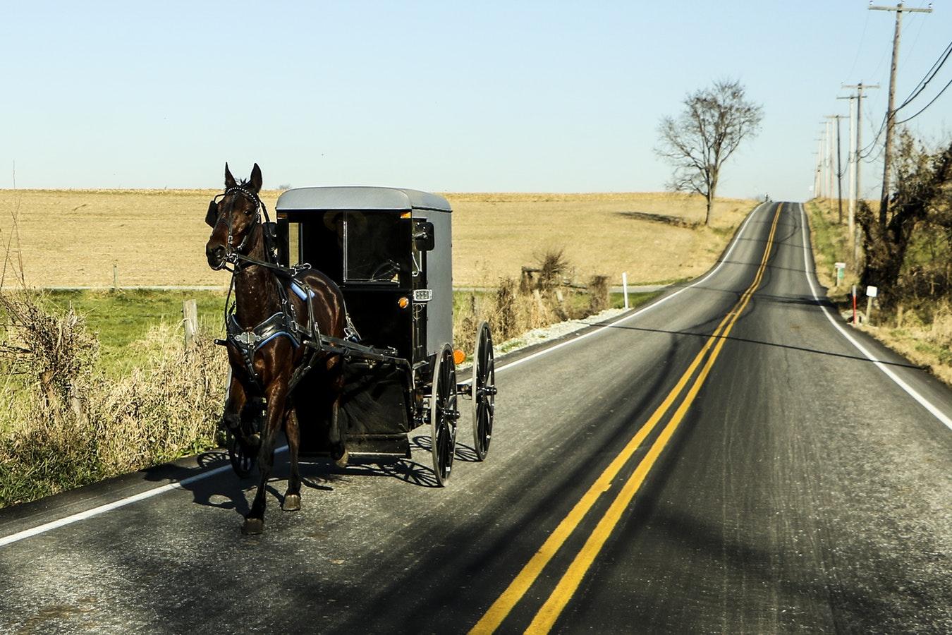 horse leading black caraige.